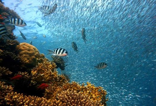 Di Pesce, Subacquea, Immersione, Acqua, Mondo Subacqueo