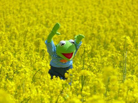 Oilseed Rape, Field Of Rapeseeds, Frog
