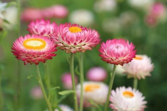花, 花草原, 夏, 牧草地, 自然, フローラ, ブルーム, 工場, 野生の花, カラフル, 日当たりの良い
