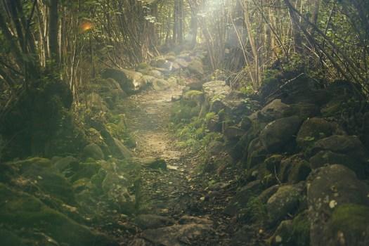 Foresta, Percorso, Mistica, Rocce, Fairytale