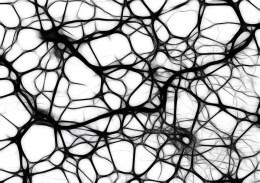 Neuroni, Cellule Cerebrali, Struttura Del Cervello