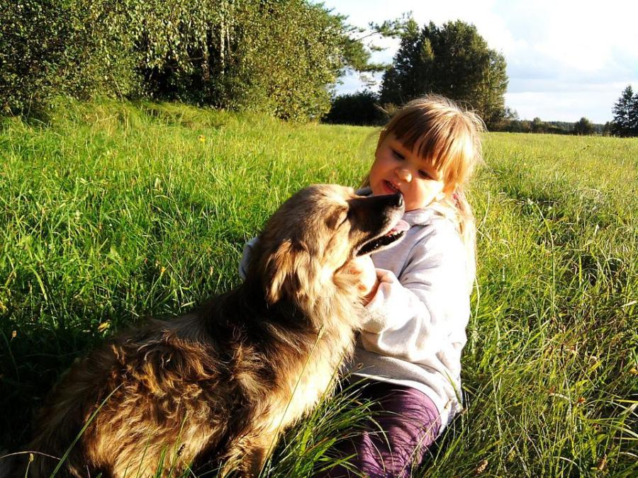 Child, The Little Girl, Dog, The Sun, Grass, Nature