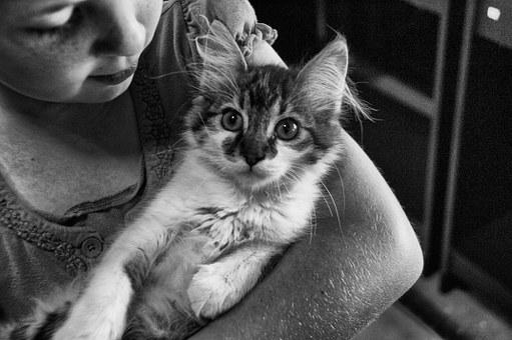 Niña, Gato, Joven, Mujeres, Animales