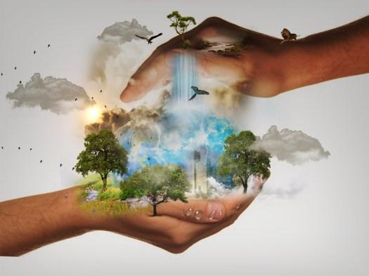 Conservazione Della Natura, Responsabilità, Mondo