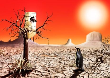 Photo Montage, Penguin, Desert, Hot, Refrigerator