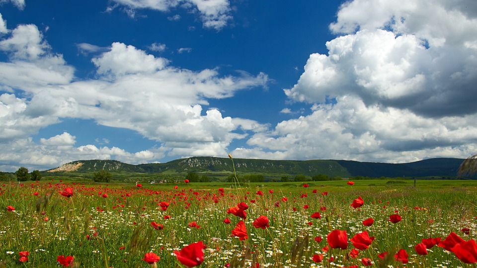 Poppy Field, Clouds, Landscape, Summer, Menstruation