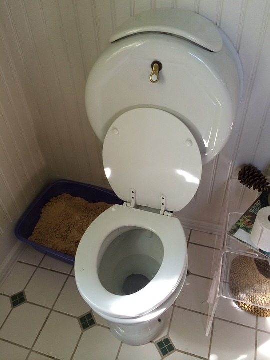 Free Photo Toilet Wc Bathroom Plumbing Free Image On