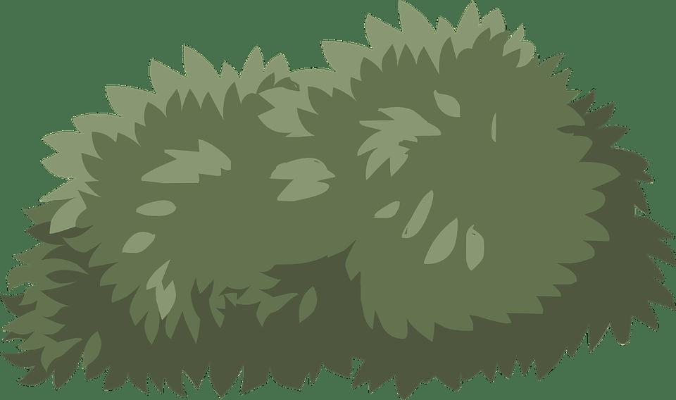 Bush Shrub Green · Free Vector Graphic On Pixabay