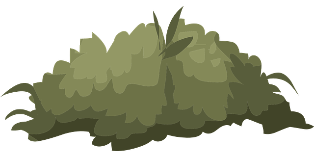 免费矢量图: 布什, 自然, 绿色, 叶子, 户外, 环境, 动物群