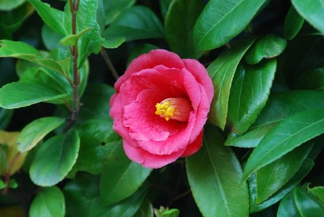 「冬の花 無料写真」の画像検索結果