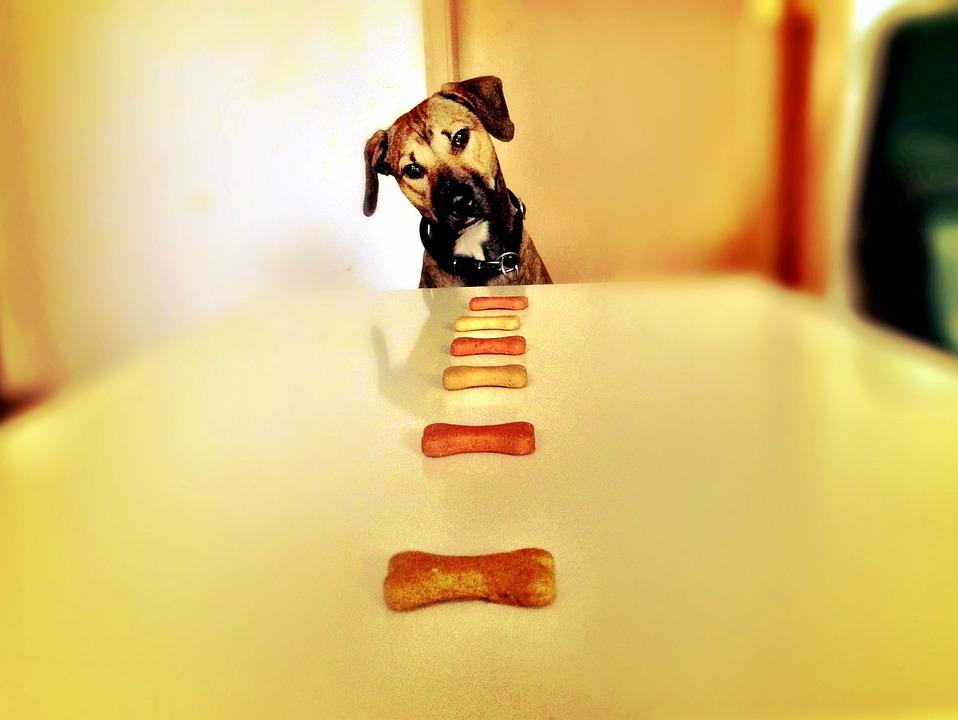 ドックフードと犬