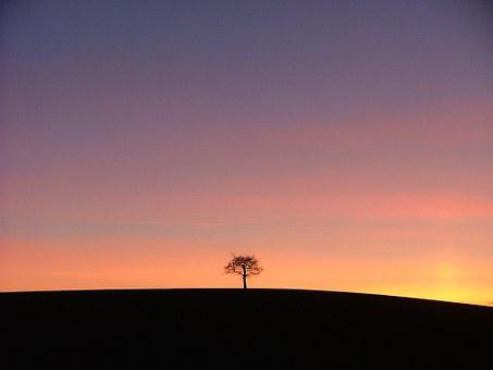A picture of a tree that is alone. Perhaps one of the few introverts.