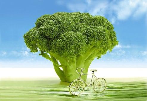 Gemüse, Brokkoli, Arboretum, Frühling