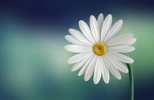 200 000 Beautiful Pictures Of Flowers In Hd Pixabay