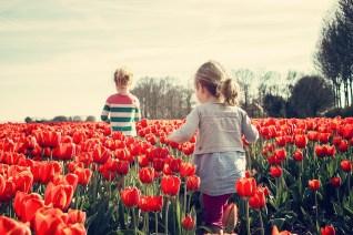 Niñas, Niños, Tulipanes, Países Bajos, Primavera
