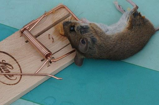 Animal, Mouse, Nager, Case, Mousetrap