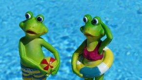 Broască, Înot, Vacanţă, Badeurlaub, Vara