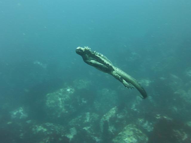 Marine Iguana Galapagos Diving Free Photo On Pixabay