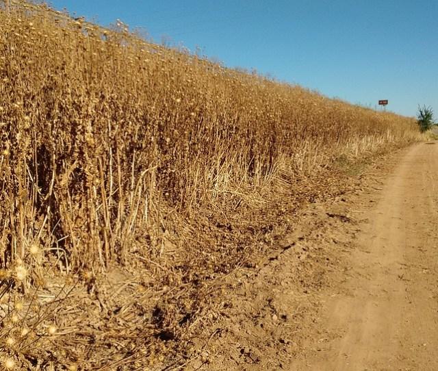 Dry Fields Autumn Open Air Path