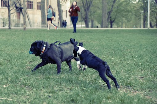 Dogs, Playing, Park, Grass, Fetch, Ball
