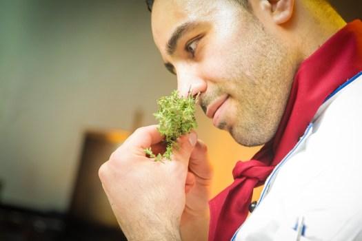 Chef, Odore, Cuoco, Spezia, Ristorante, Italiani