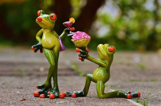 Chiedo Scusa, Proposta Di Matrimonio, Mi Scusi, Rana