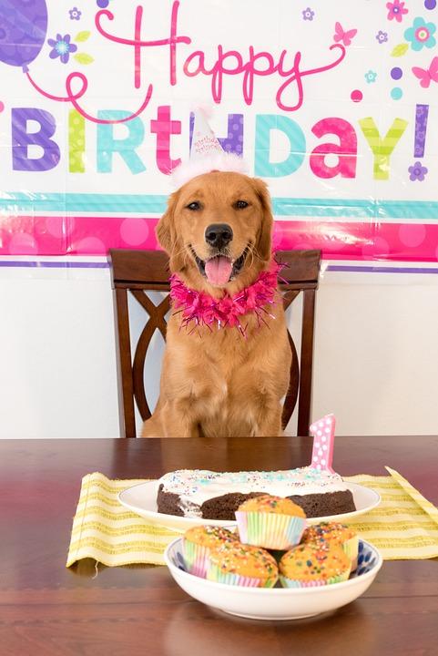 Bildergebnis Fur Happy Birthday Freche Bilder Geburtstagswunsche