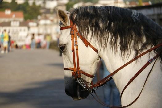 Cavallo, Stanchezza, Testa, Animale, Testa Di Cavallo