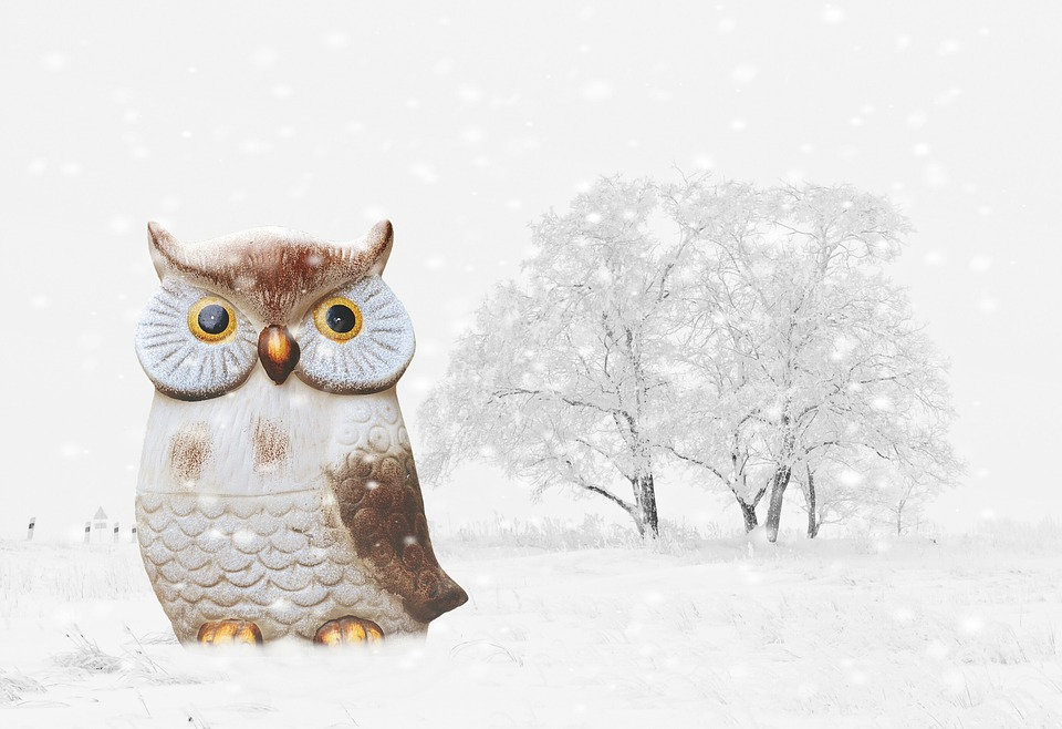 Kostenloses Foto Eule Winter Schnee Vogel Lustig