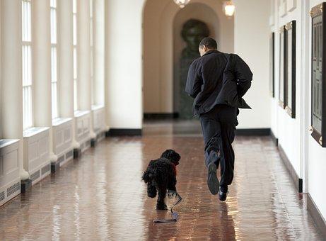 Barack Obama And Bo, Play, Run