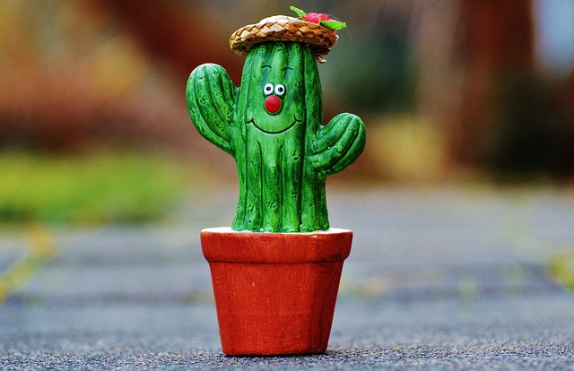 Free Photo Cactus Straw Hat Face Funny Free Image On