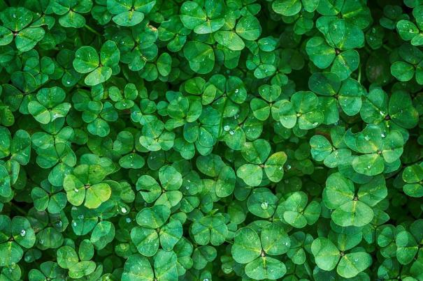 Clover, Plant, Green, Vegetation, Background, Greenery