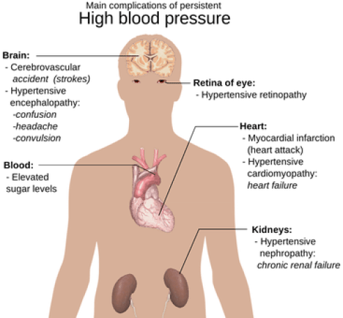 Anatomy Of The Human Body Big Picture Hype
