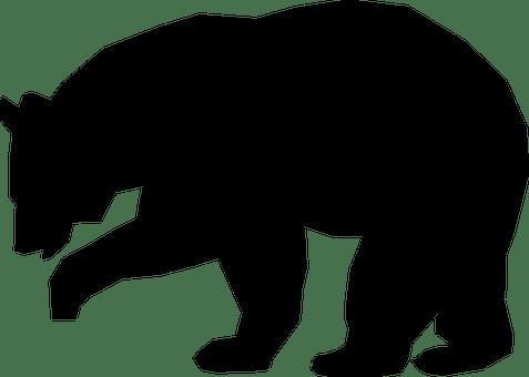 Animal Bear Black Mammal Minimal Paw Wild