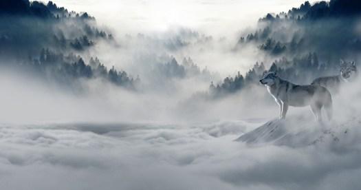 Lupo, Lupi, Forest, Invernale, Solitudine, Solitario