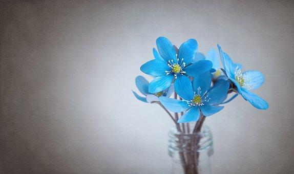 雪割草, 青, 花, 青い花, 入札, 春の花, 早期に咲く花