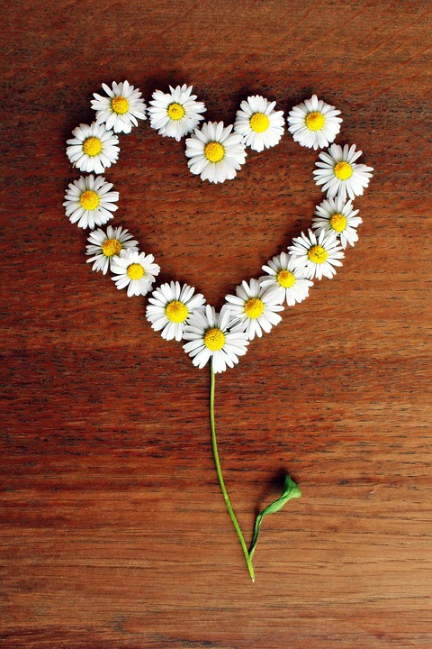 Free Photo Daisy Heart Daisy Heart Love Free Image