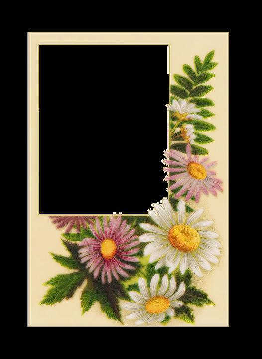 Free Illustration Vintage Postcards Flowers Free