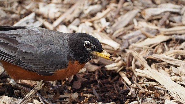 mulch and bird