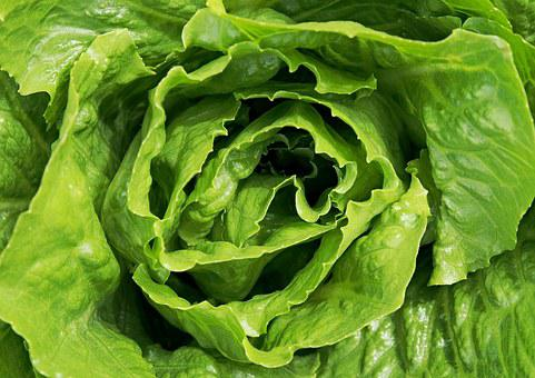 Lettuce, Salad, Leaves, Leaf, Green