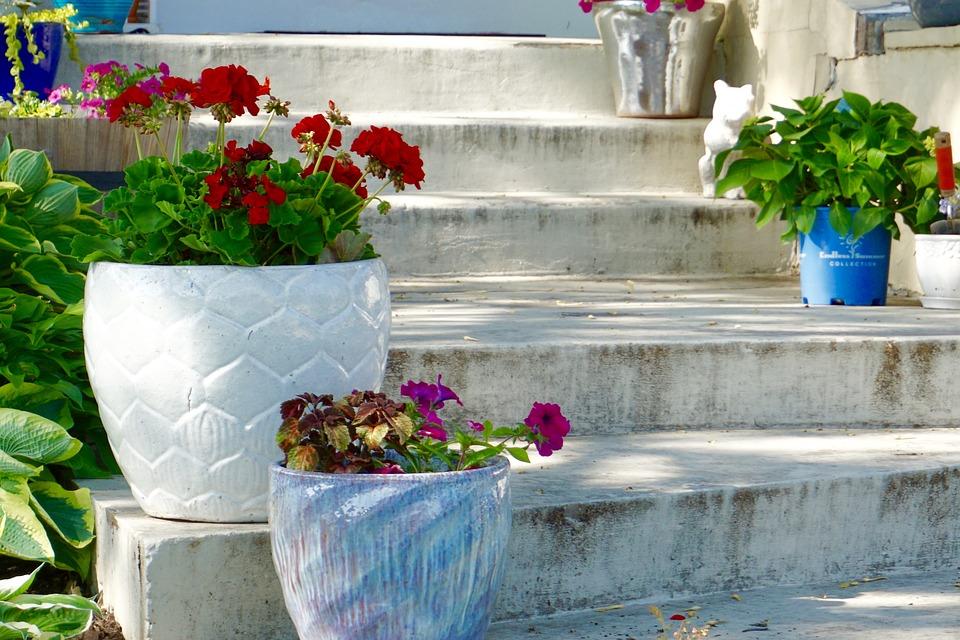 Stairs, Plants, Flowers, Flower Pots, Steps, Garden