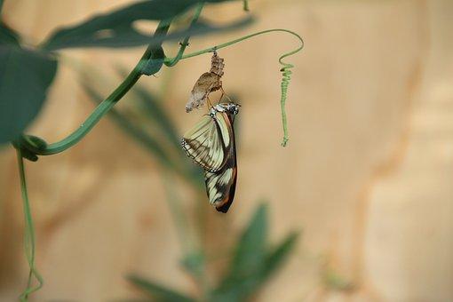 Révéler, Papillon, Jardin De Papillons