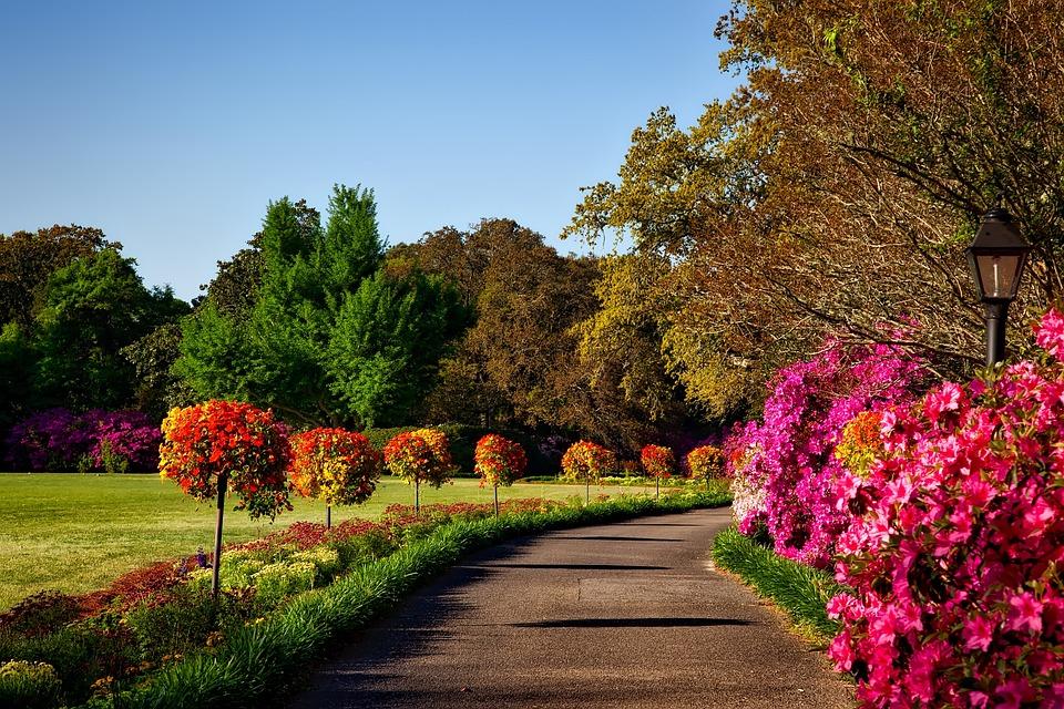 House Garden Landscape