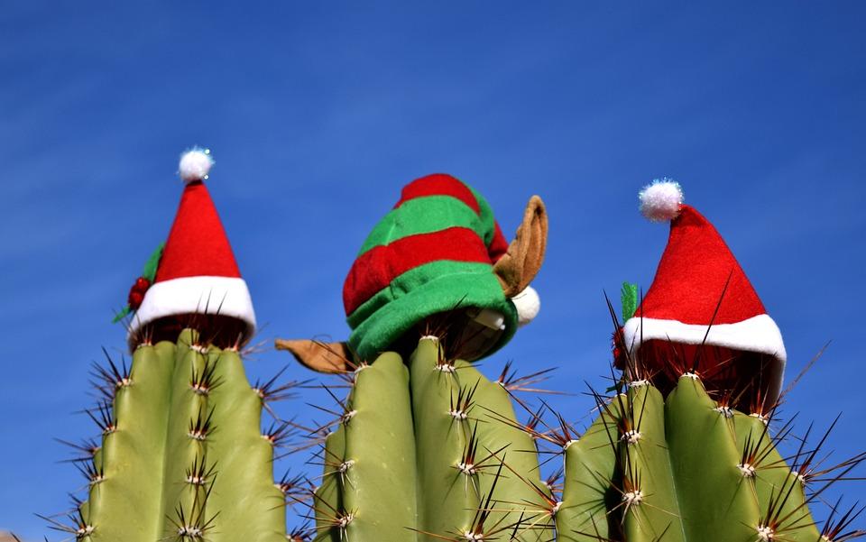 Cactus Christmas Holiday Free Photo On Pixabay