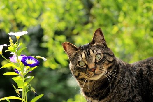 Cat, Kitty, Fiore, Primavera, Animale Domestico, Felino