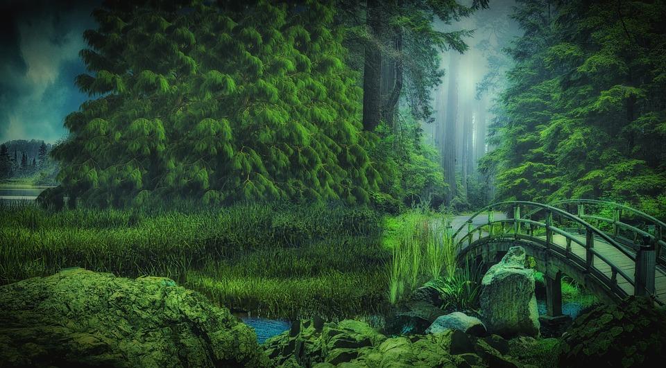 Forest Nature Bridge Free Image On Pixabay