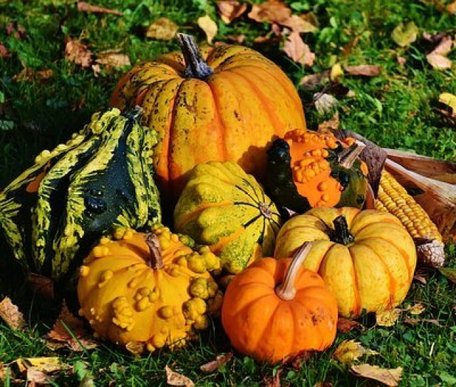 Pumpkins Decorative Squashes Nature
