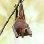 Los murciélagos hablan entre ellos