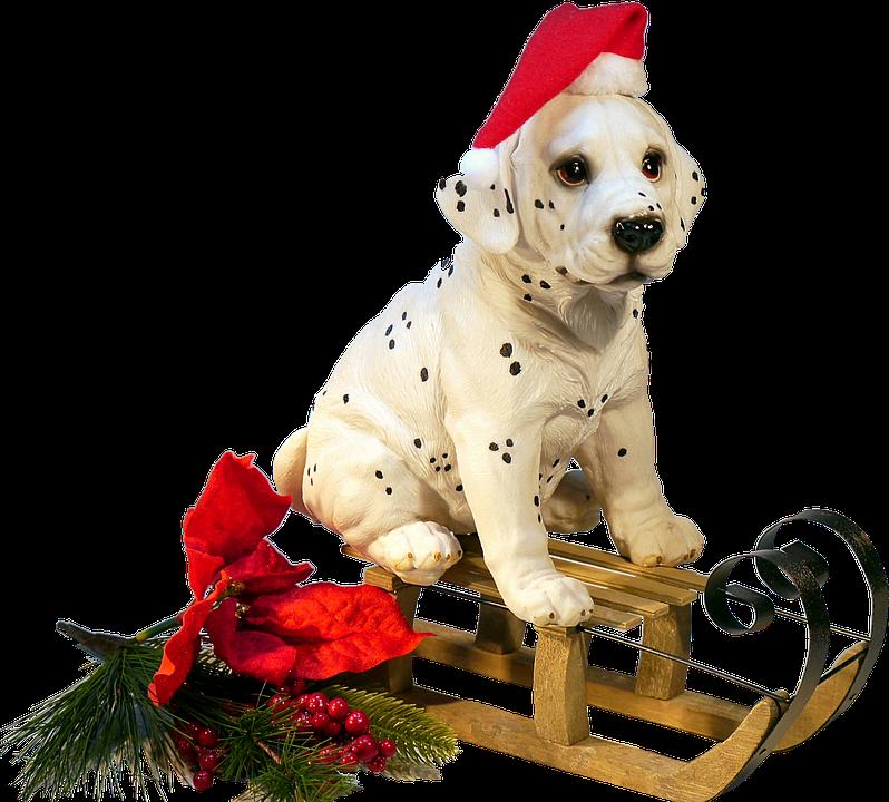 Isolated Dog On Sledge Christmas Free Photo On Pixabay