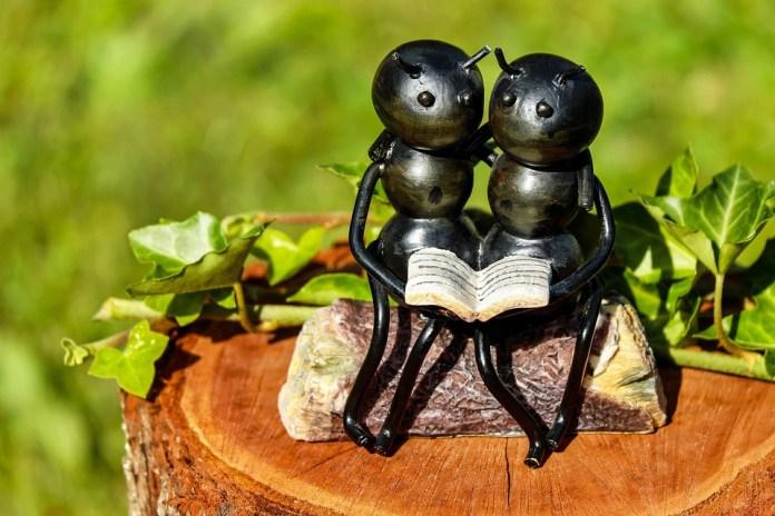 Formigas, Inseto, Obra, Ferro, Sentado, Carinho